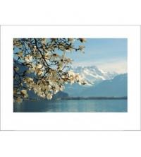 LAKE GENEVA SUISSE (Taille:91x61,5 cm)