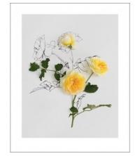 Rose botanical (80x60cm)